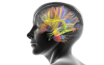 Вашият мозък винаги има резервен план