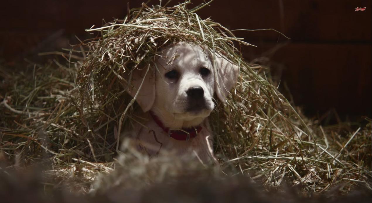 Кученцето, което направи най-успешната реклама на Super Bowl 2015