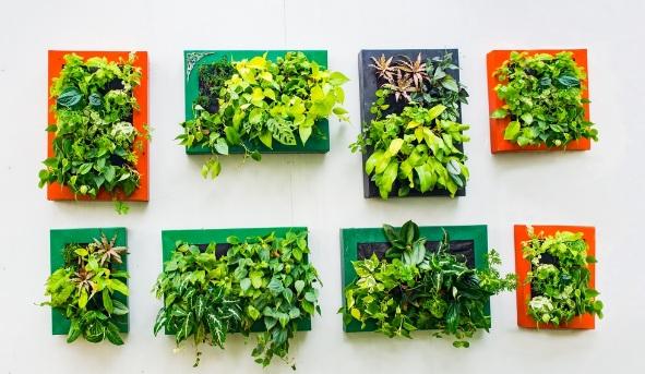 Зелените стени – модерно и нестандартно архитектурно творение